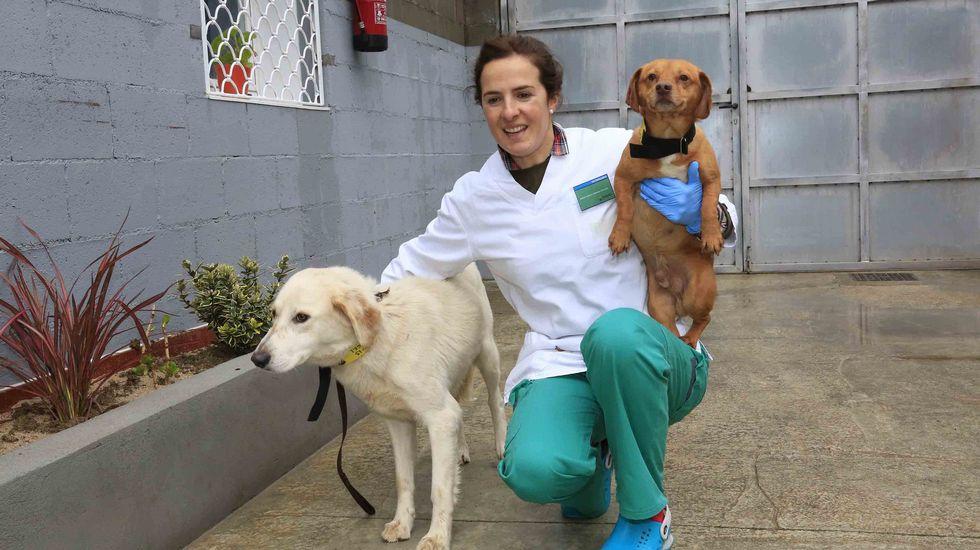 Estudian abrir un centro de acogida de perros en el sur de la provincia