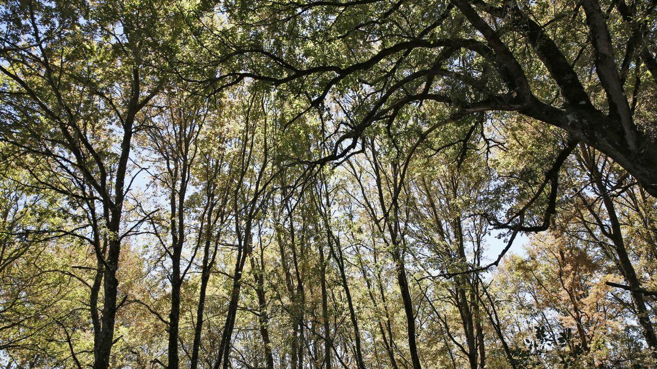 Denuncian la tala ilegal de 20 árboles en la Red Natura en Verín