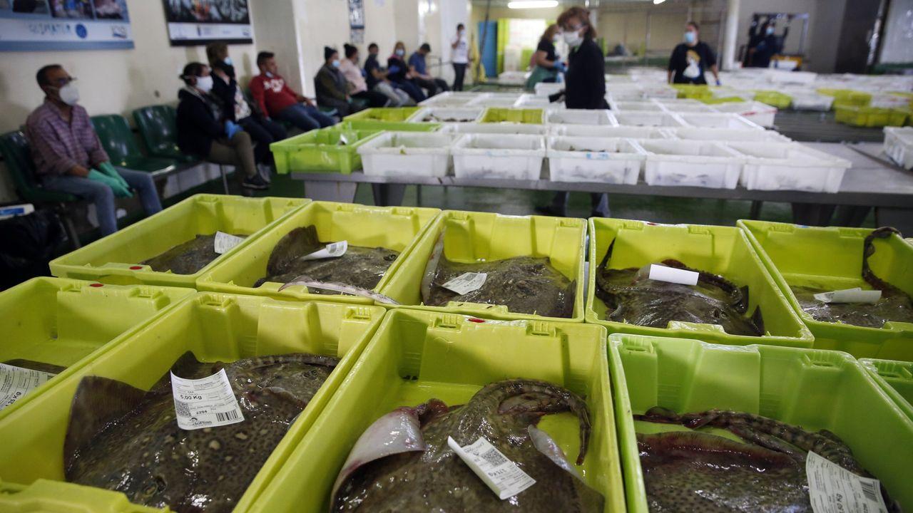 La cadena de la pesca, un año contra viento y pandemia