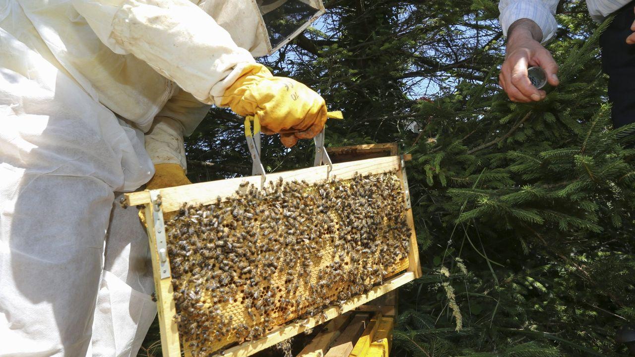 El nuevo curso del plan de formación apícola de Fonteboa empieza este mes