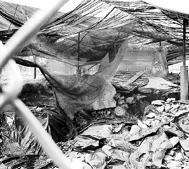 La situación actual de la cubierta pone en peligro las pinturas del dolmen que se encuentra en Caban