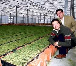 Viveros ma ente produce plantas forestales con calidad aenor for Viveros de plantas en vigo