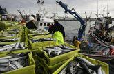 El cerco reclama más cuota de xarda (en la foto una descarga en A Coruña), jurel y sardina.