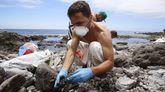 El vertido de fuel del Oleg Naydenov se extiende por la costa suroeste de Gran Canaria. Grupos de voluntarios en tareas de limpieza, Playa de La Cantera (Mogan).