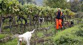 La caza mueve cien millones de euros al año en Galicia.