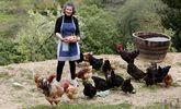 Eva Castro, en la finca de Redondela donde viven en libertad sus gallinas, que generan una pequeña producción de huevos.