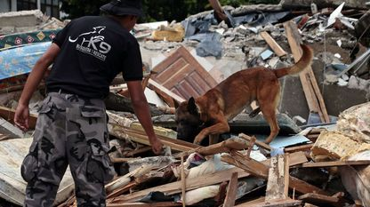 Un rescatador y su perro buscan víctimas entre los escombros tras el terremoto de Ecuador