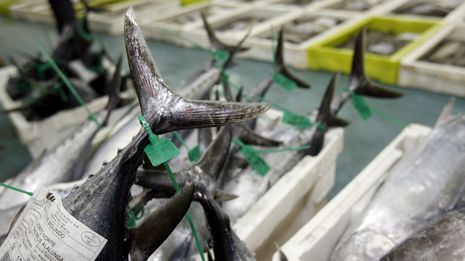 Greenpeace da clases sobre etiquetado de pescado