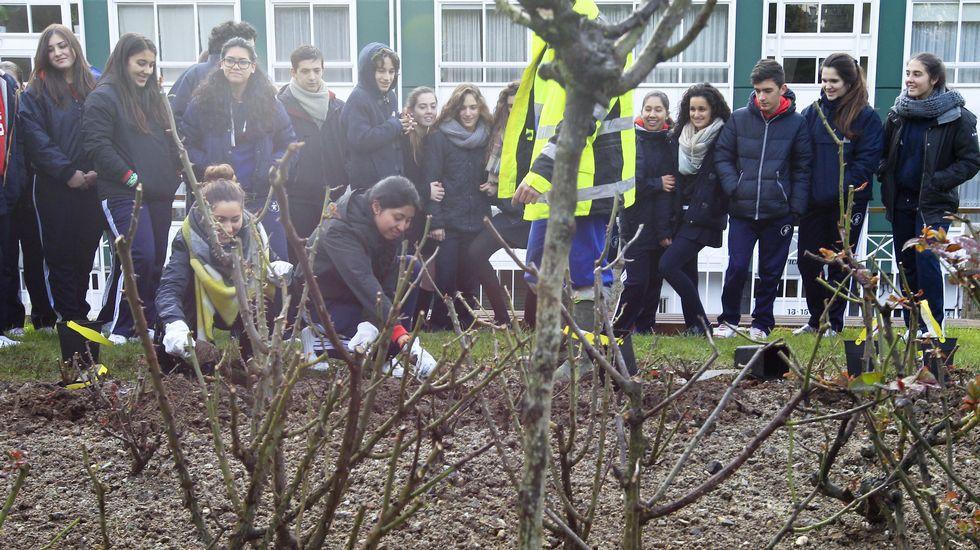 Plantación de rosales por escolares en los jardines del parque Reina Sofía de Ferrol por las víctimas de violencia de género