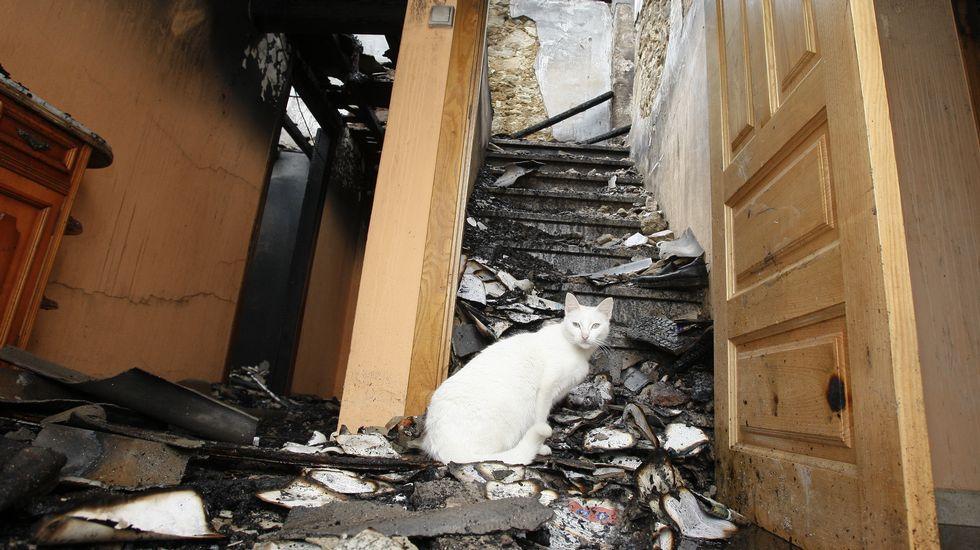 Una gata salva a una pareja de morir quemada.