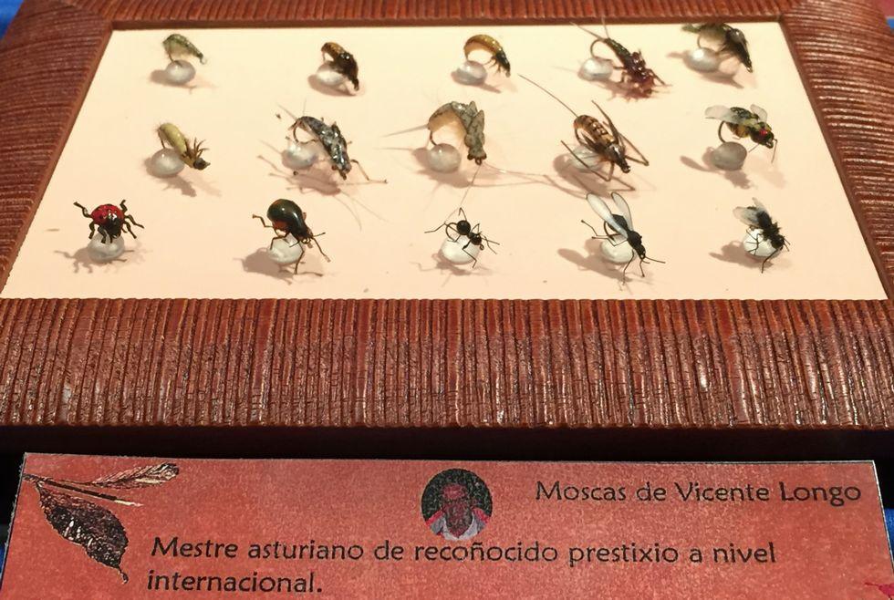 Una de las colecciones de moscas que se exponen