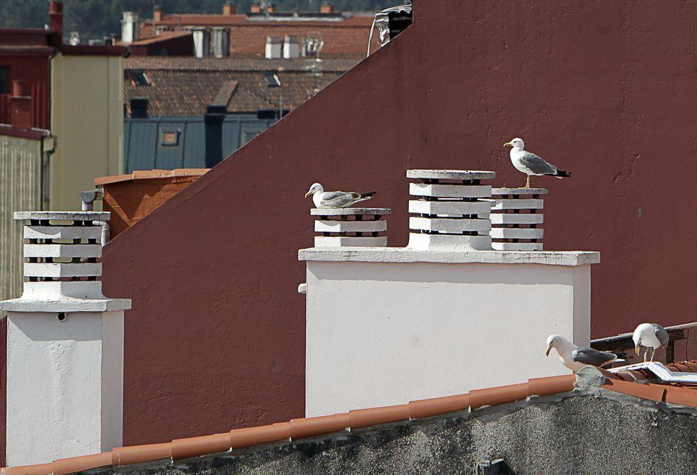 En muchos tejados del centro pueden rastrearse hasta dos y for Que significa terraza