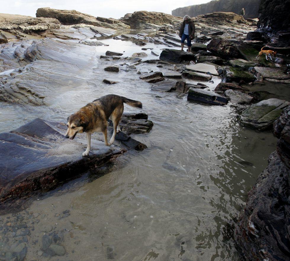 Hay ahora en tramitación dos iniciativas en marcha en A Mariña para poder acceder con perros.