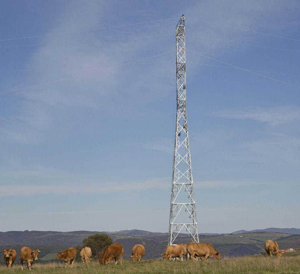 El ganado seguirá pastando al lado de las torres.