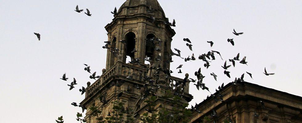 Las palomas proliferan en cascos urbanos, en la imagen el monasterio de San Salvador de Lourenzá.