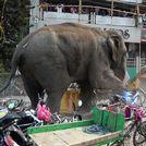 Destrozos de un elefante en la ciudad india de Siliguri