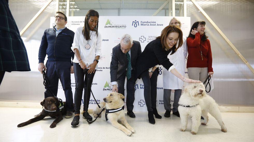 Perros terapéuticos de la Fundación Jove en el hospital materno infantil Teresa Herrera