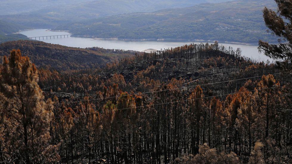 Galiza, incendios: La Xunta admite que en As Fragas do Eume han ardido 750 hectáreas.  - Página 2 OY30C1F1_1